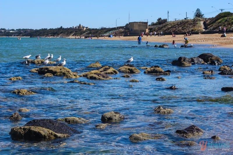 Parkdale Beach Melbourne