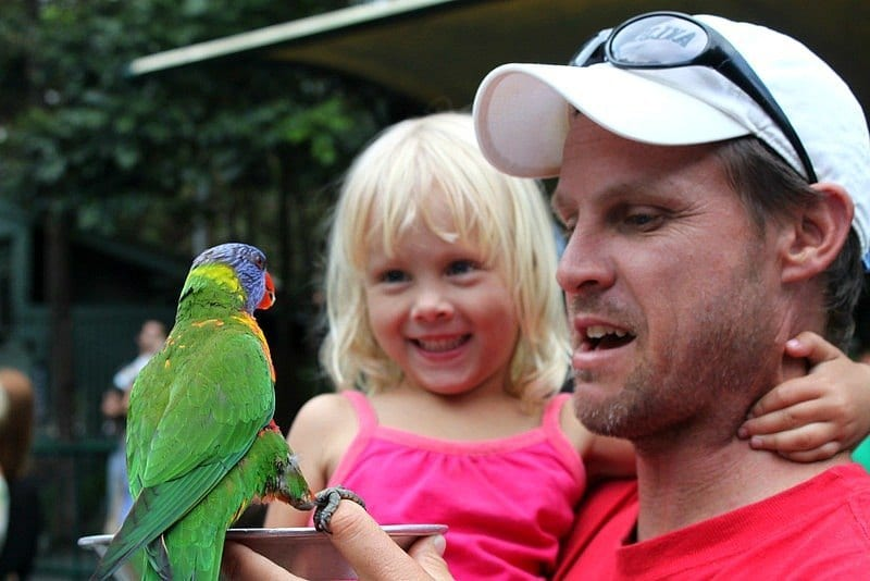Feed the Rainbow Lorikeets at Currumbin