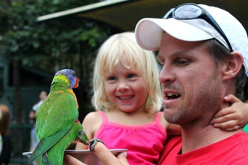 Nourrir les perroquets arc-en-ciel à Currumbin