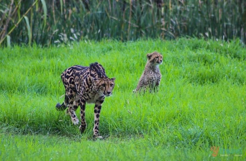 dubbo-zoo-zoofari-lodge (16)