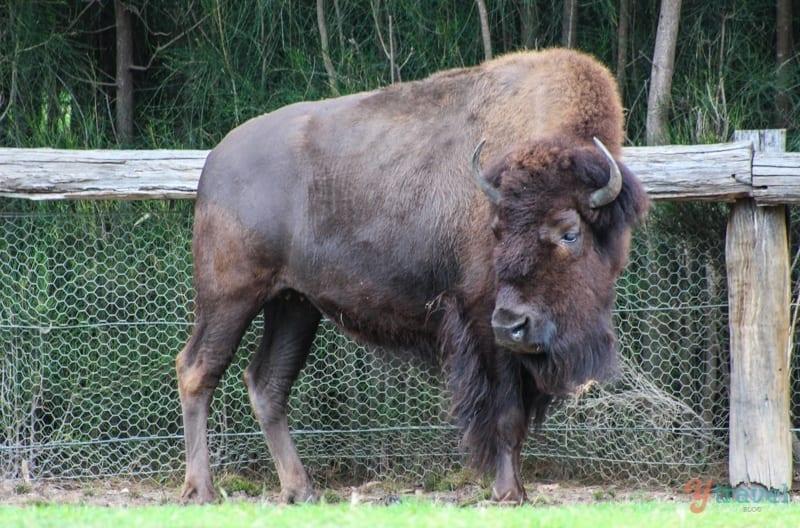 dubbo-zoo-zoofari-lodge (52)