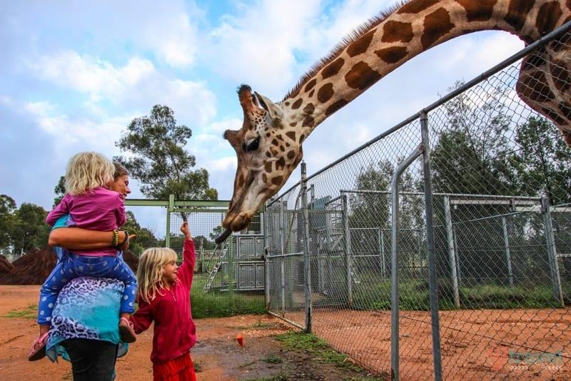 Dubbo Zoo - NSW, Australia