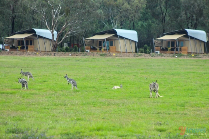 dubbo-zoo-zoofari-lodge (61)