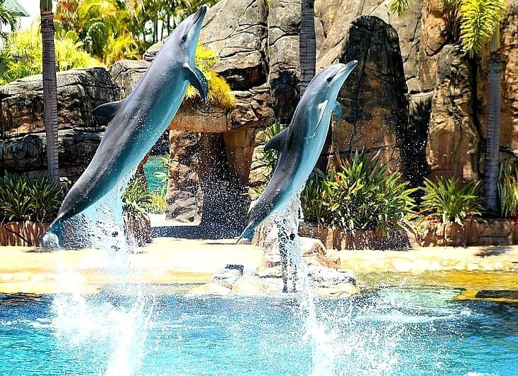 Seaworld - Gold Coast, Queensland, Australia