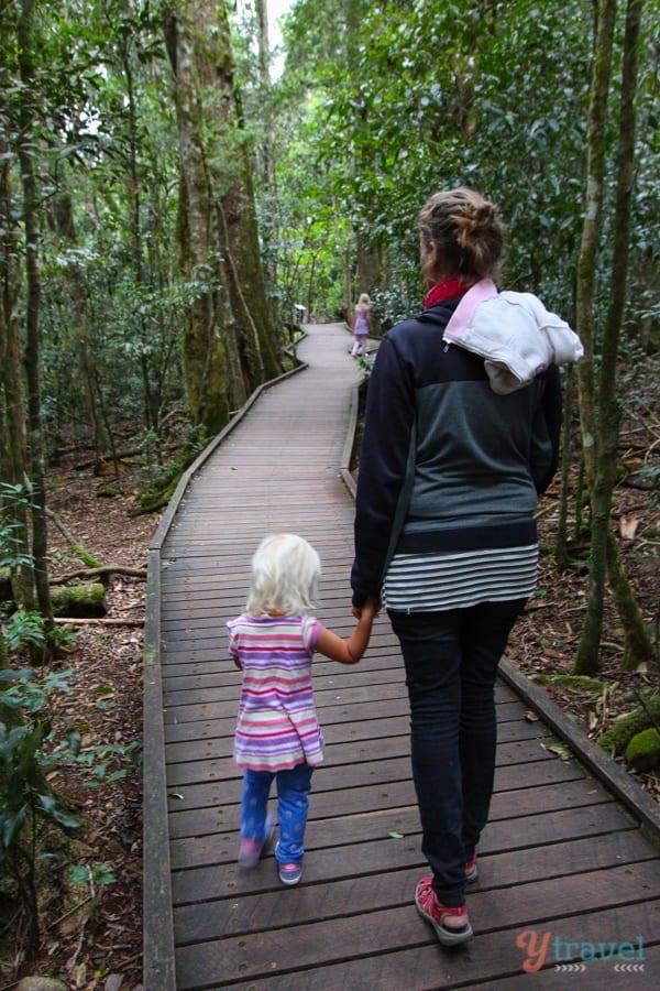 Lamington National Park, Gold Coast, Australia