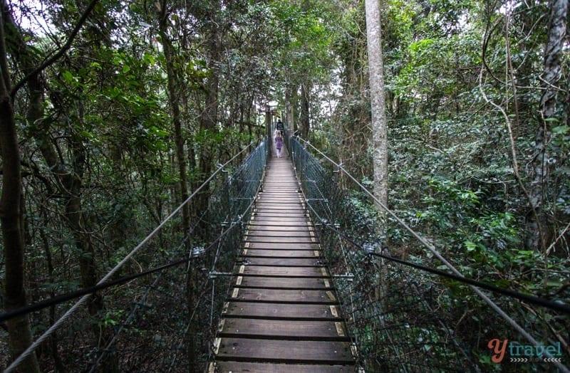 O'Reilly's Tree Top Walk - Gold Coast, Australia