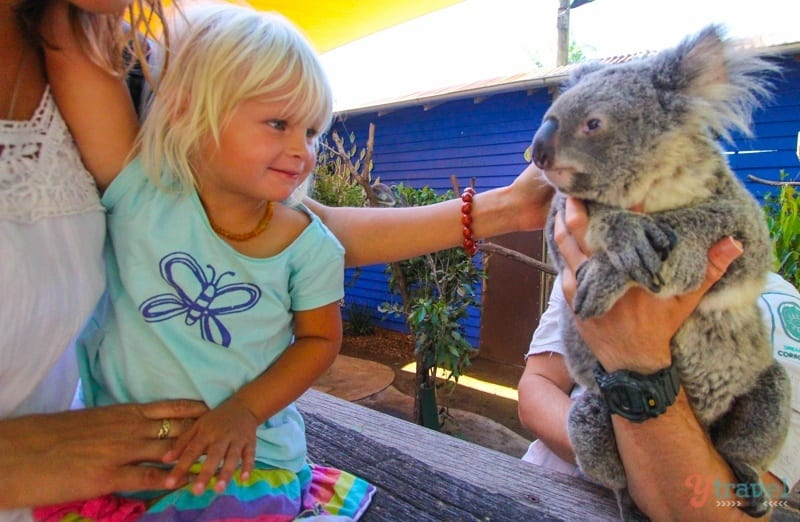 Meet a Koala - Dreamworld, Gold Coast, Australia