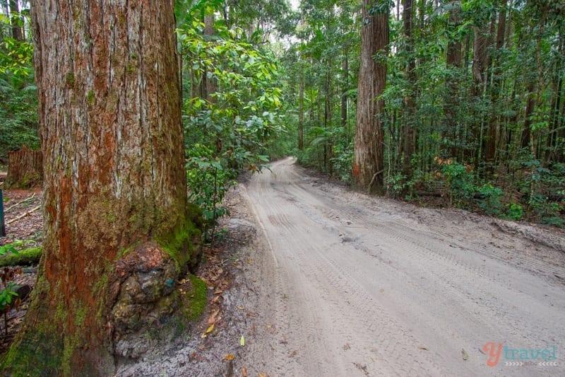 Fraser-Island-Queensland-Australia-47 ▷ Comenta sobre los 14 mejores viajes por carretera en Australia de los 7 lugares más hermosos de Oceanía - Soapietv