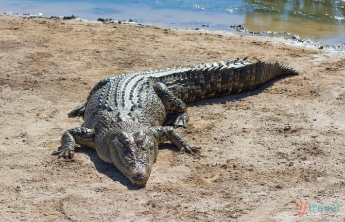 Koorana Crocodile Farm - Rockhampton, Queensland