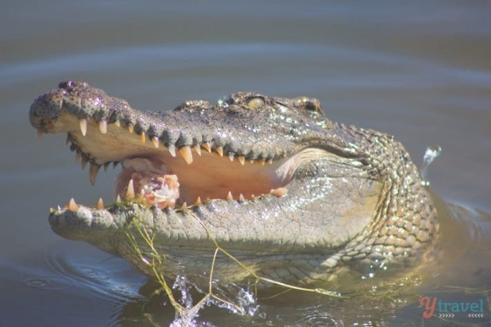 Koorana Crocodile Farm - Rockhampton, Queensland