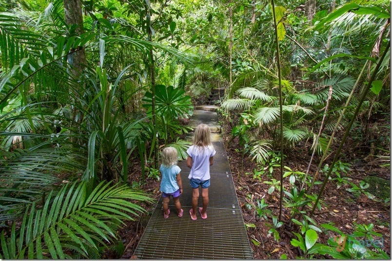 Daintree Discovery Centre (2)