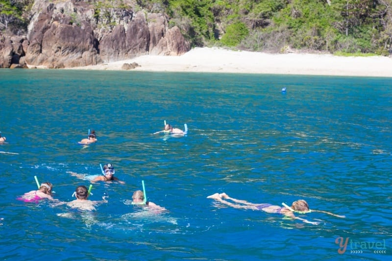 Snorkeling in the Whitsunday Islands
