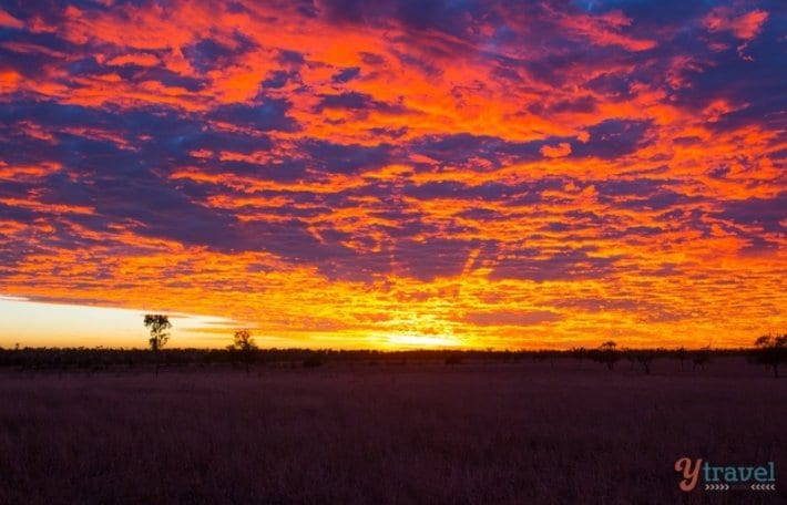 Sunrise at Texas Longhorns Wagon Tours in Australia