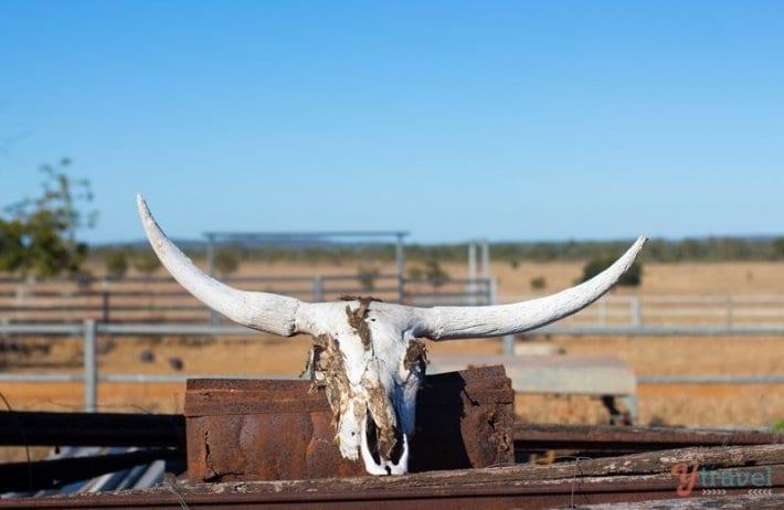 Texas Longhorns Australia