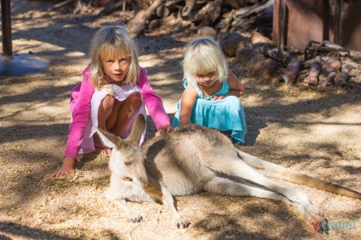 Penny the Kangaroo at Texas Longhorns in Australia