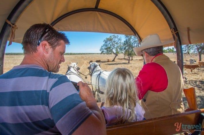 Texas Longhorn Wagon Tours in Australia