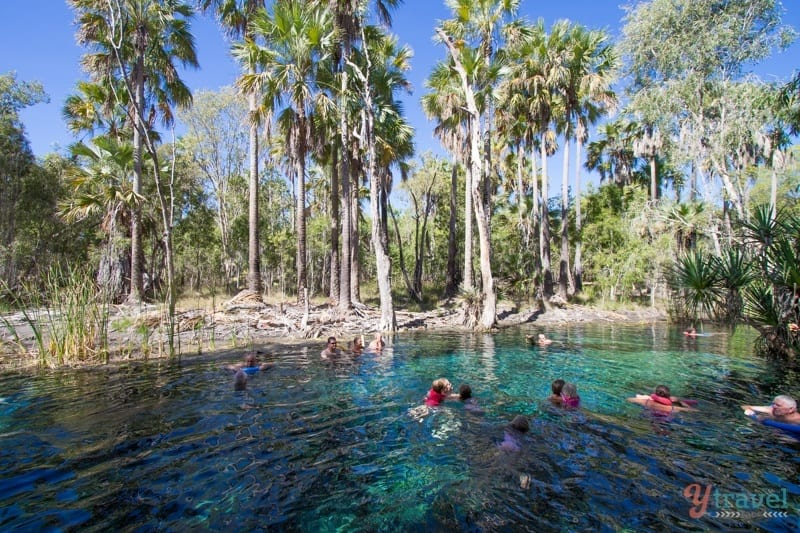 Mataranka Springs - Northern Territory