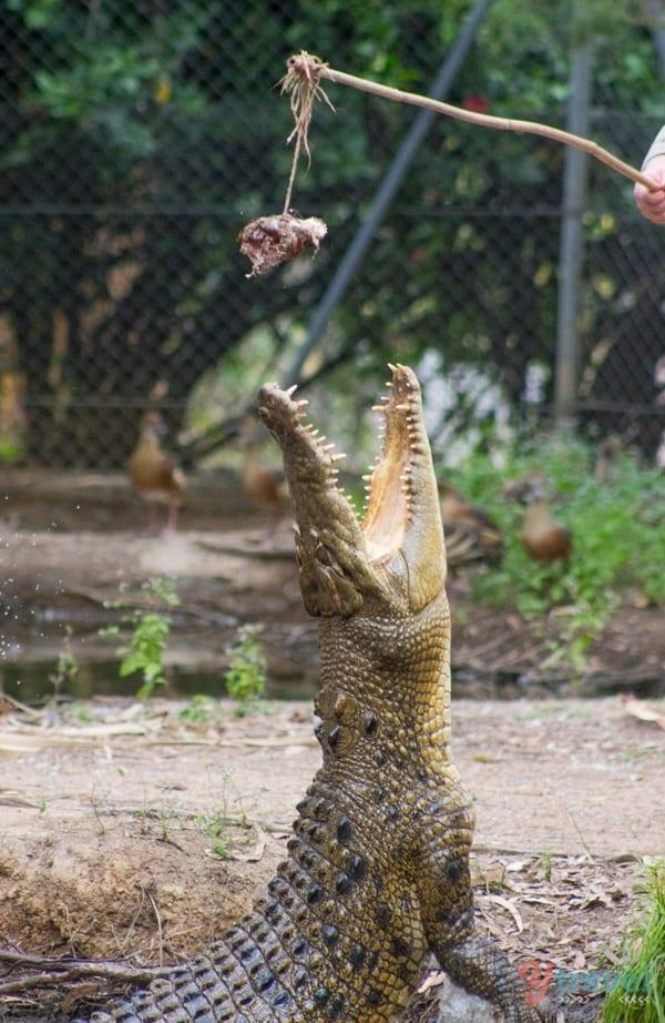Billabong Wildlife Sanctuary - Townsville, Queensland, Australia