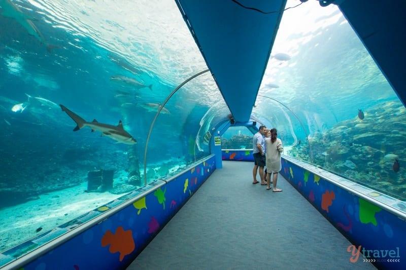 Reef HQ - Townsvile, Queensland, Australia