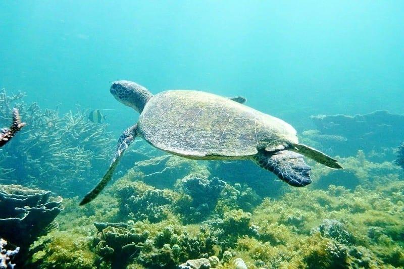 110104 ▷ Comente sobre 3 maravillas naturales de Exmouth, Australia occidental, por las 10 mejores bahías de Australia para relajarse en 2020 - Australia sin envolver