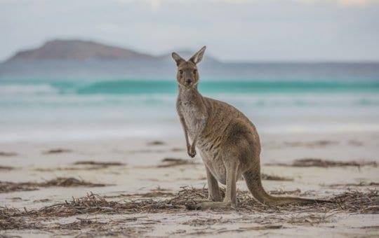 Esperence, Western Australia