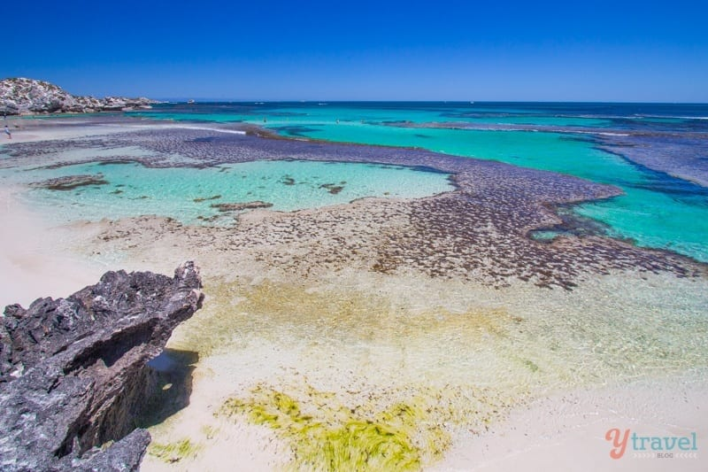 Rottnest Island Australia  city photos gallery : Why Rottnest Island Should Be On Your Australian Bucket List