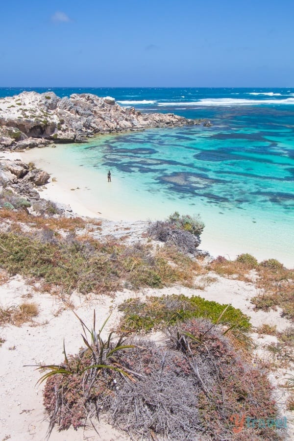 Rottnest Island Australia  City pictures : Why Rottnest Island Should Be On Your Australian Bucket List