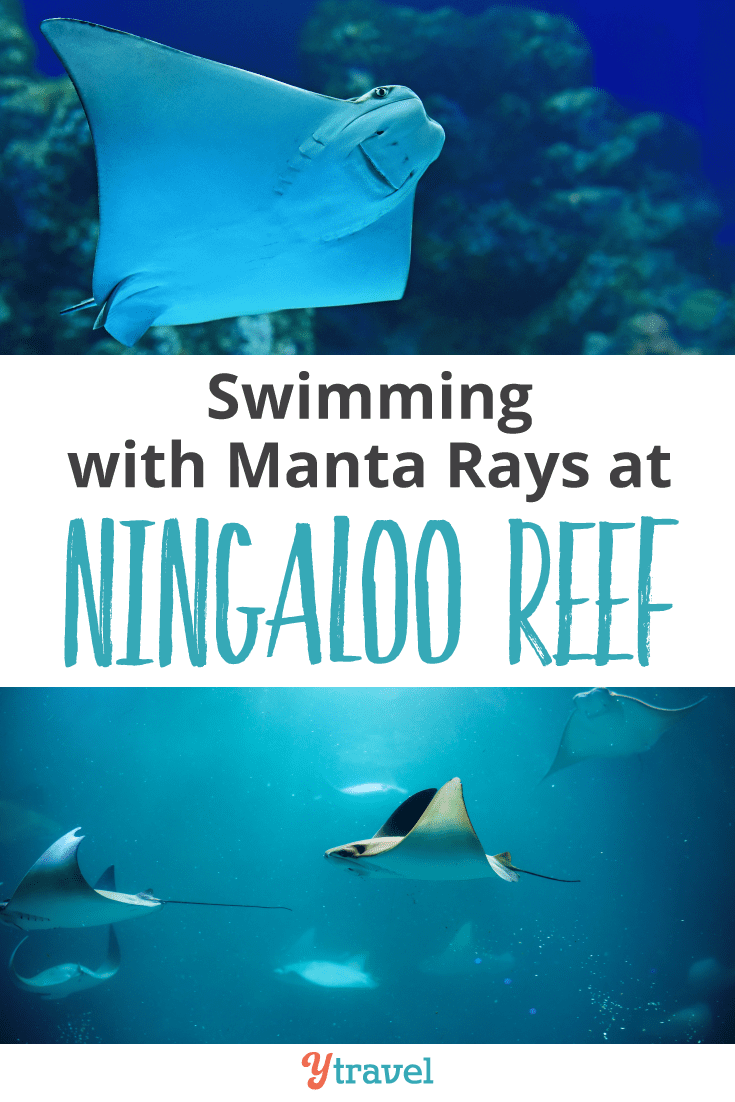 Swimming with Manta Rays at Ningaloo Reef