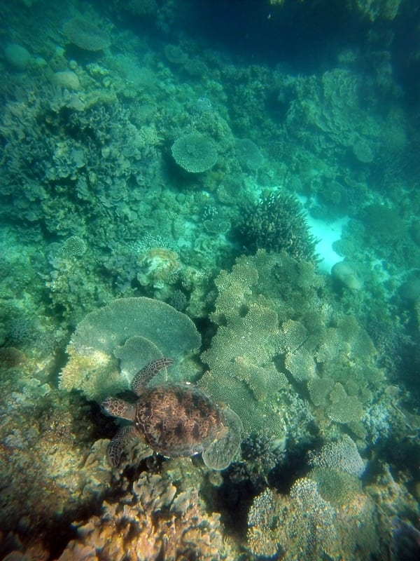 Swimming with turtles in Ningaloo Reef, Western Australia