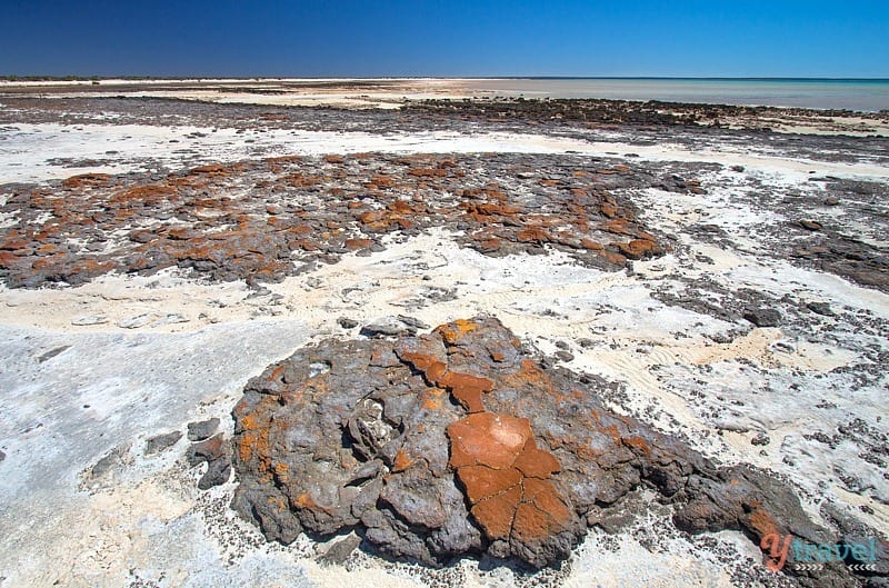 The ancient stromatolites, Western Australia