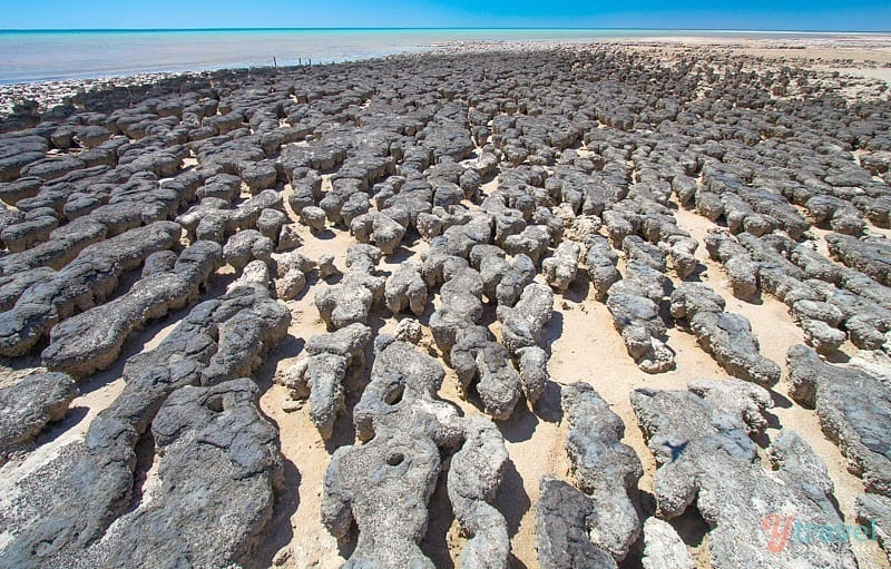 The ancient stromatolites - Western Australia
