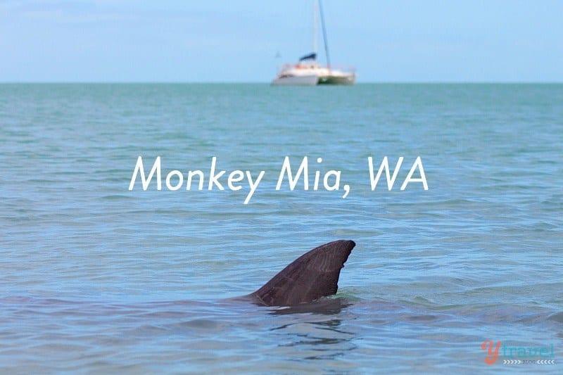 Monkey Mia, Western Australia