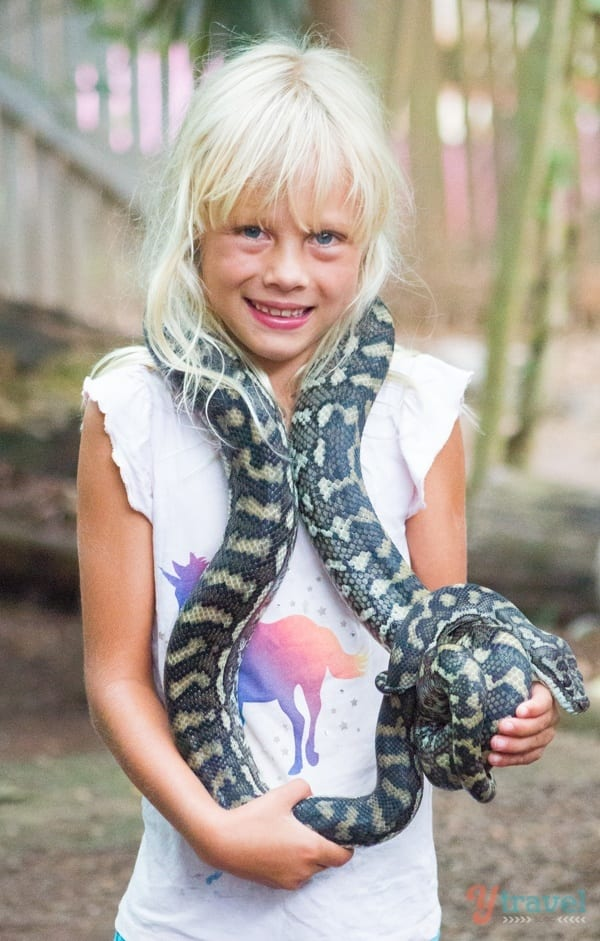 holding snakes