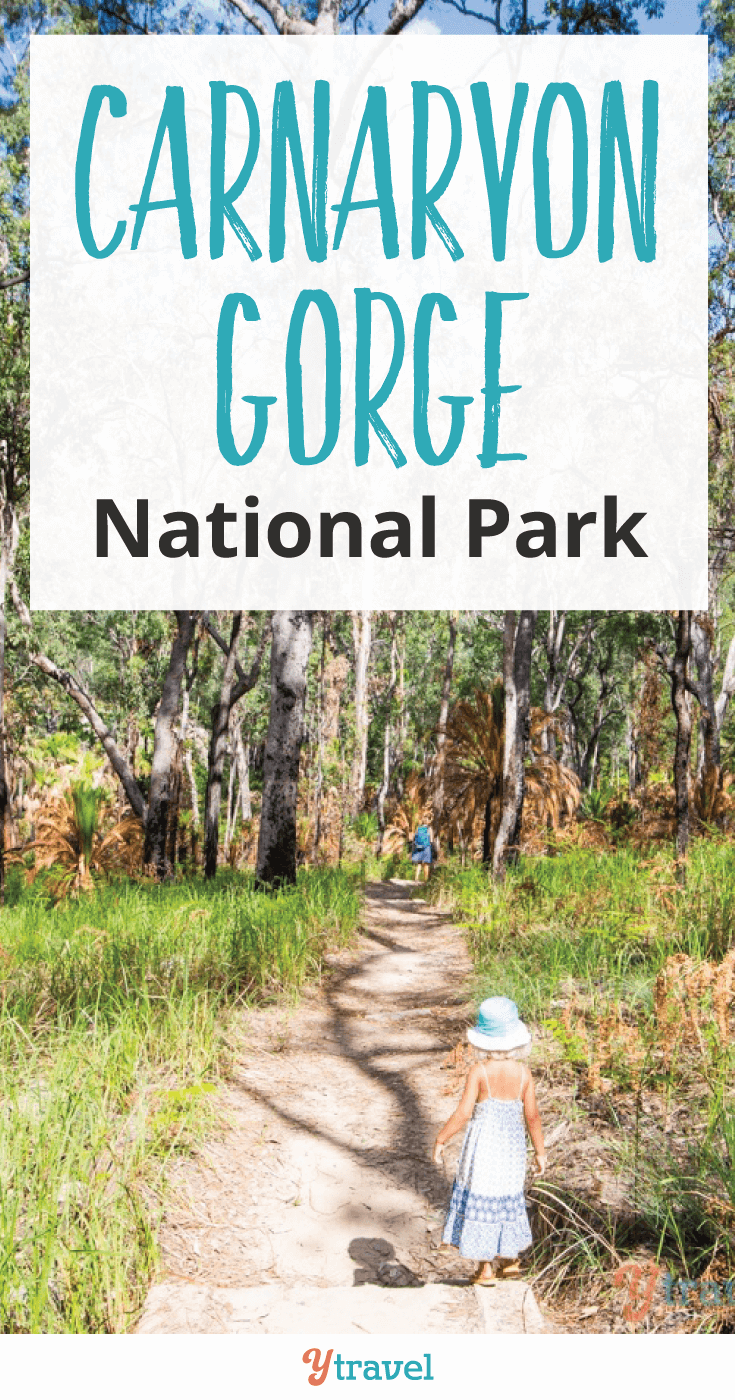 Our readers recommended we visit Carnarvon Gorge National Park and we're so glad we did!