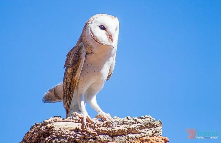 Desert Park, Alice Springs - Northern Territory, Australia