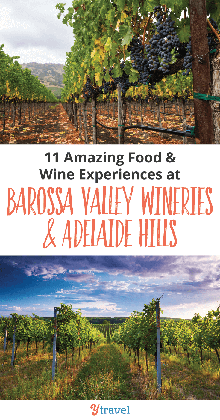 Calling all foodies and wine lovers. Discover 11 Amazing Food & Wine Experiences at Barossa Valley Wineries & Adelaide Hills.