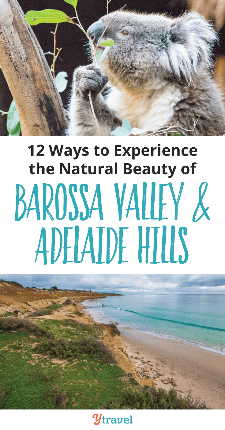 Barossa Valley is a beautiful wine region in Southern Australia. Here are 12 ways to experience the natural beauty of Barossa Valley and Adelaide Hills.