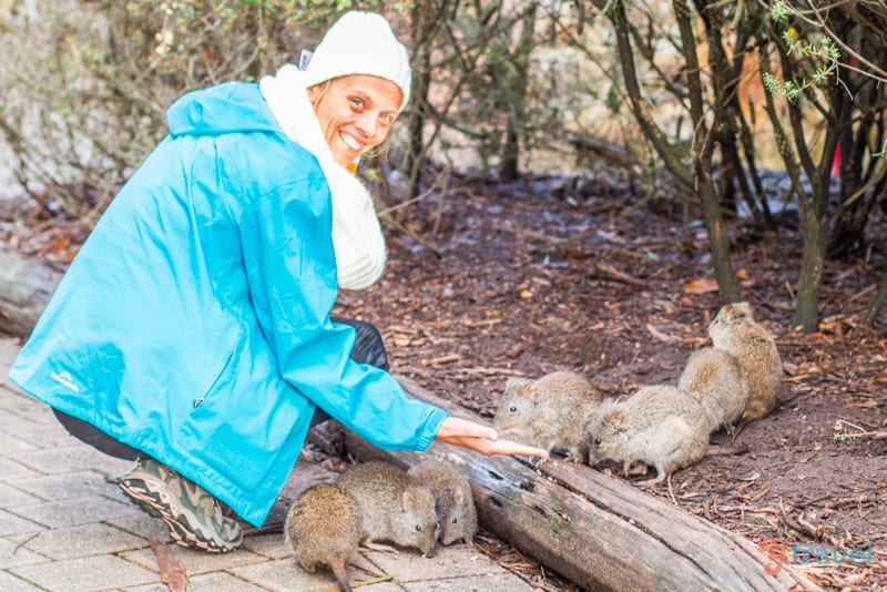 Hand feed the potoroos at Cleland Wildlife Park, Adelaide Hills, South Australia