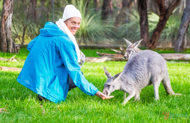 Hand feed the kangaroos at Cleland Wildlife Park, Adelaide Hills, South Australia