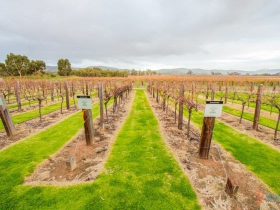 Jacob's Creek Winery, Barossa Valley, South Australia