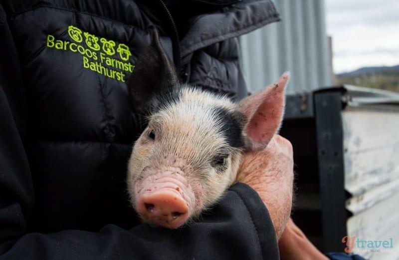 Barcoos Barn Farm Stay, Bathurst, NSW