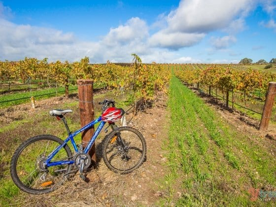 Bike and picnic in the Barossa Valley, South Australia