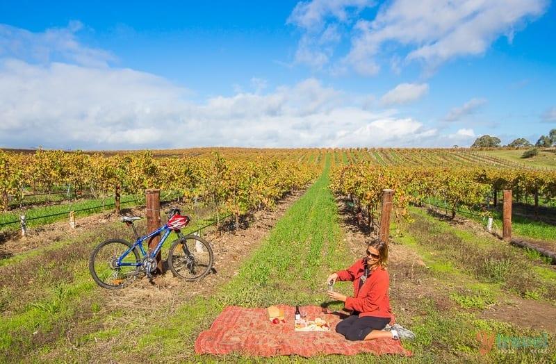 Jacobs-Creek-Barossa-Valley-South-Australia-302 ▷ Comente sobre cómo visitar Australia en unas vacaciones de dos semanas por Priya