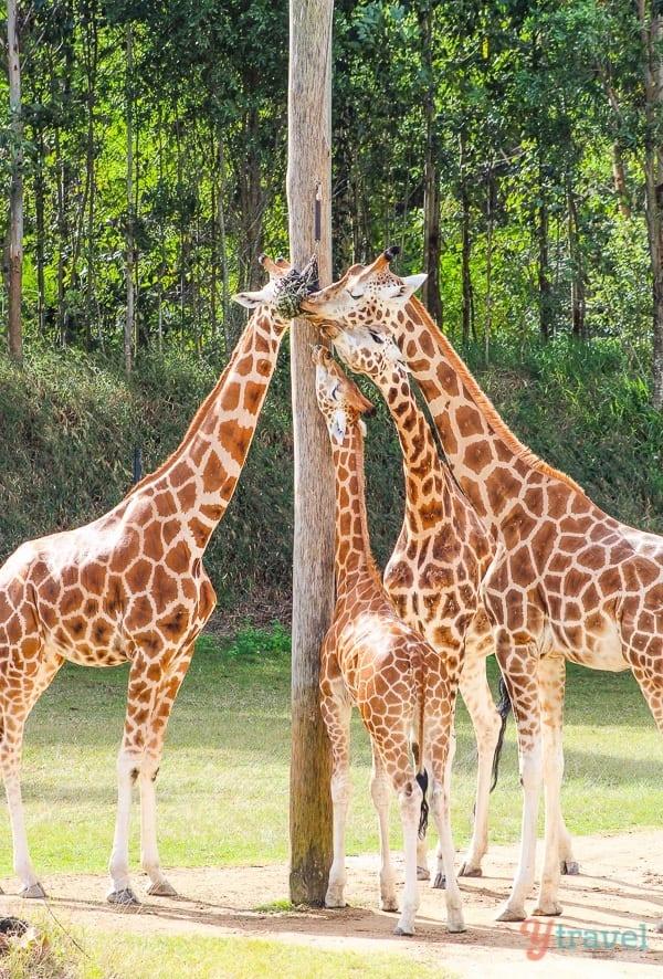 Australia Zoo, Queensland, Australia