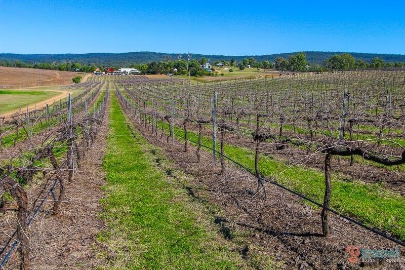Dusty Hill Vineyard, South Burnett Wine Trail, Queensland, Australia