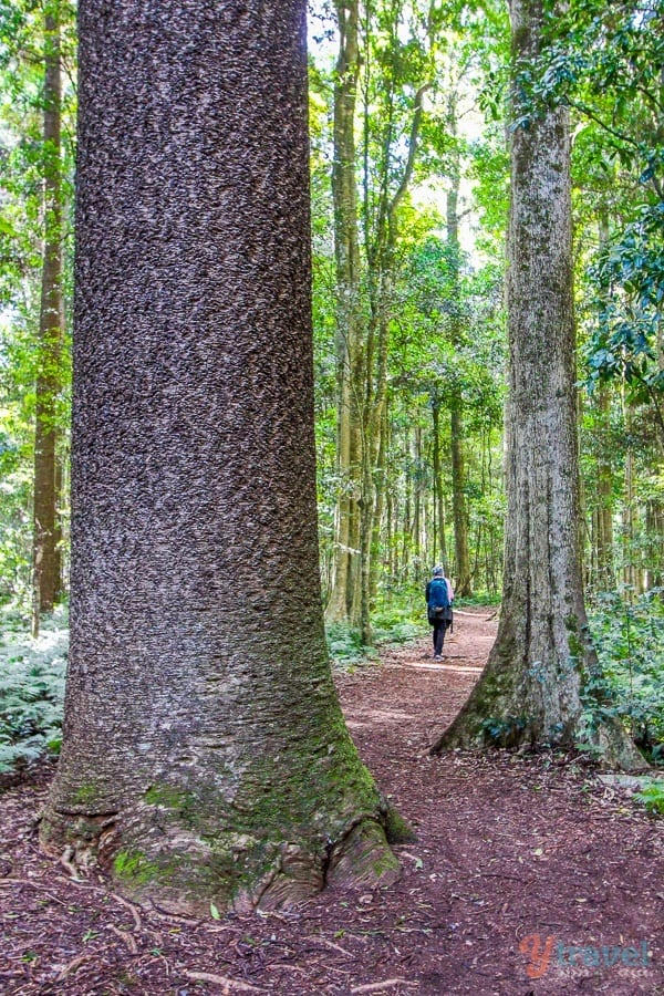 Go hiking in the Bunya Mountains in Queensland, Australia