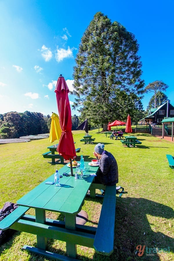 Lunch at Poppies Cafe in The Bunya Mountains, Queensland, Australia
