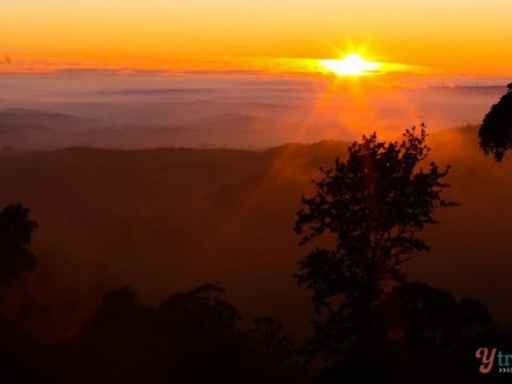 Sunrise in The Bunya Mountains, Queensland, Australia