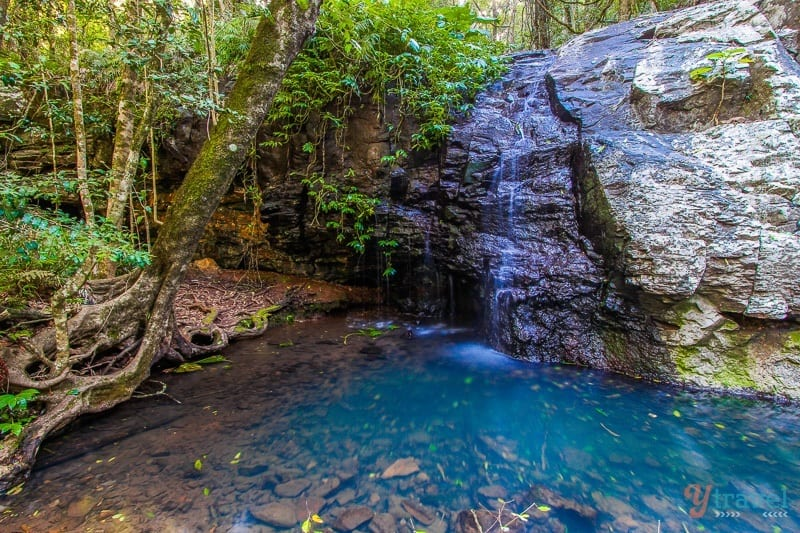 The Bunya Mounatins, Queensland, Australia