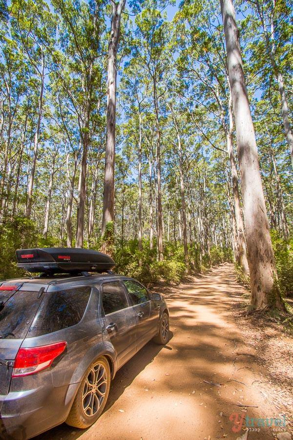 Boranup Forest, Western Australia